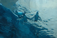 Penguin04_1
