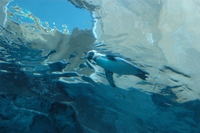 Penguin05_1