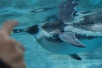 Penguin09_1