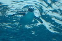 Penguin18