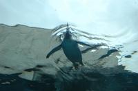 Penguin46